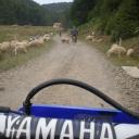 Roemenie 2012 motor jan 009
